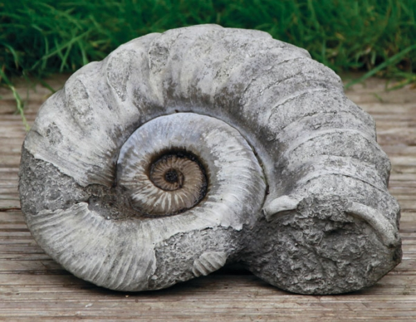 94268-Ammonit