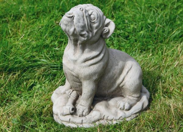 94256-Bulldogge-Barry