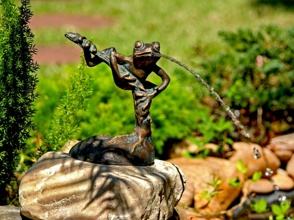 Kletternder Frosch