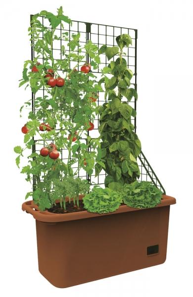 Pflanz-Box für Gemüse